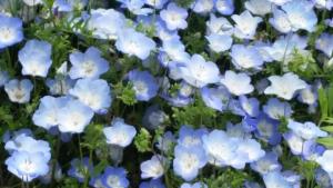 花じゅうたん2