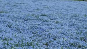 4花じゅうたん