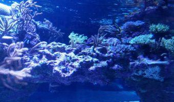 サンゴ水族館